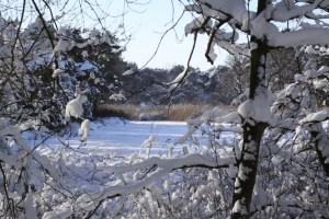 Winter in Brabant